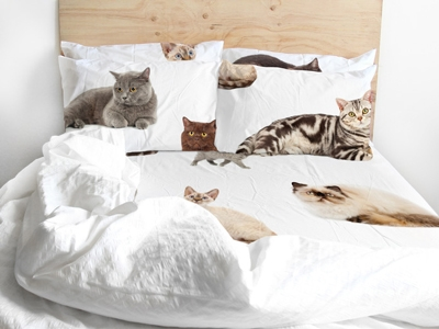 Edredom cama gato