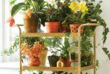 plantas flores decoreba design carrinho