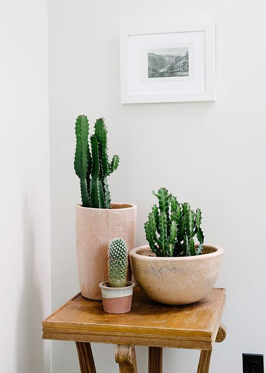 cactus-primavera-2016